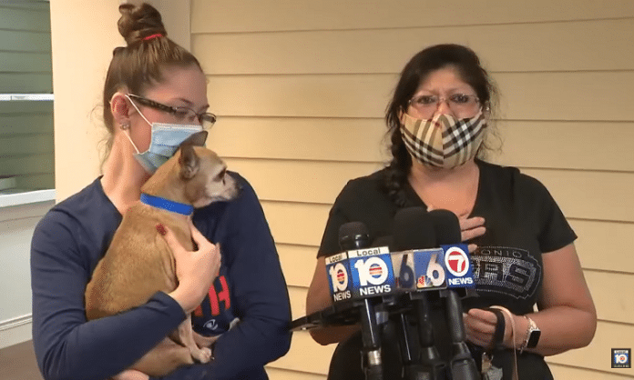 a chihuahua is reunited with his lost san antonio family