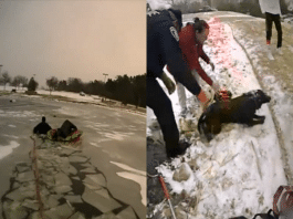 police officers rescue dog frozen pond southlake texas