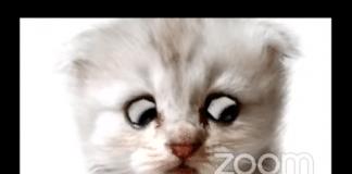 texas attorney cat zoom screenshot