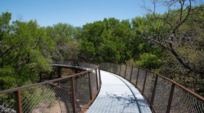 Image of Skywalk at Phil Hardberger Park